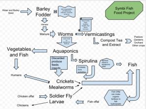 TomKat fish food flow chart